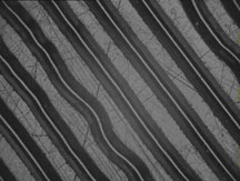 This microphotograph of the grooves in a 78 r.p.m. shellac phonograph record was taken with an electronic camera. The audio data is encoded in the side-to-side modulation of the groove trajectory.
