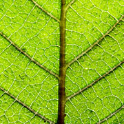 Quantum physics and plant biology seem like two branches of science that could not be more different, but surprisingly they may in fact be intimately tied.